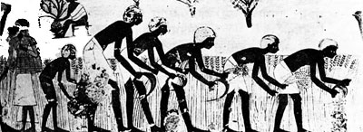 Farming in Egypt 4000 years ago